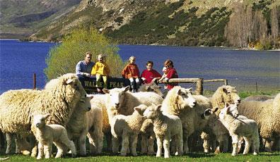 »Neuseeland Mietwagenreise - Land der Kiwis auf eigene Faust«