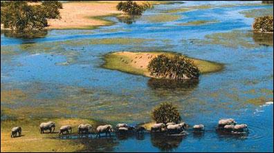 »Elefantenherde im Okavango-Delta«