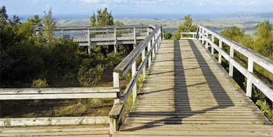 »Rangitoto Island - Wander-Studienreise Neuseeland«