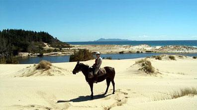 »Reiterreisen in Neuseeland: Reiturlaub am Strand«