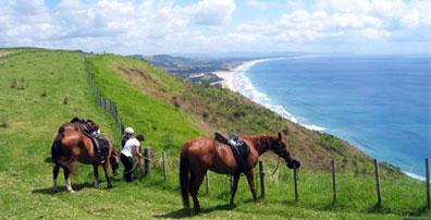 »Neuseeland Reiturlaub phantastische Strände, weites Farmland«
