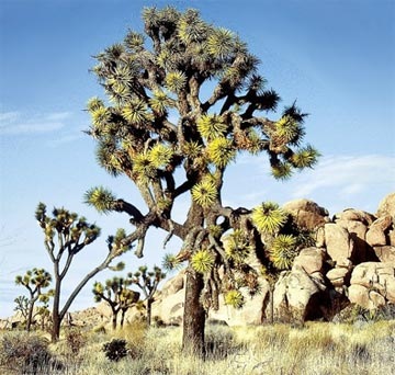 »Western Values Reise: Joshua Tree Nationalpark«