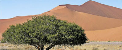 »Dünen - Zuhause in Namibia Rundreise Mietwagen«