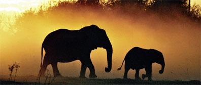 »Elefanten im Etosha Nationalpark - Rundreise Namibia«