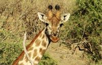 »Südafrika Abenteuer - Durch Königreiche nach Kapstadt«