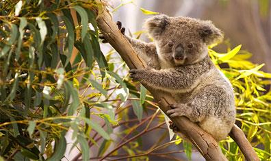 »Australien Höhepunkte - Traumhafte Rundreise Australien«