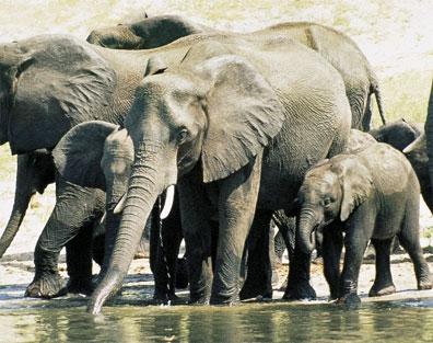 »Southern Africa Camp Safari - Camping Safari im Safari Truck«