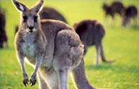 »Gruppenreisen Australien - Urlaub in Australien gemeinsam«