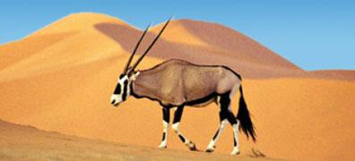 »Günstige Fly & Drive Angebote Namibia Mietwagen-Reisen«