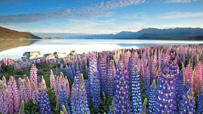 »Lake Tekapo - Klassische Neuseeland Rundreise«