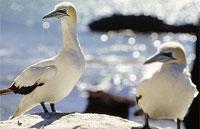 »Naturwunder Neuseelands - Busrundreise Neuseeland«