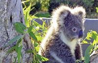 »Aktive Erlebnisreise in Westaustralien«