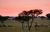 »Abenteuer Tansania - Erlebnisreiche Rundreise Tansania«