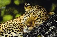 »Afrikas Perlen - Flug und Zugreise durch Südafrika«