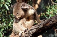 »Australien Reisen 3 Wochen Australien intensiv«