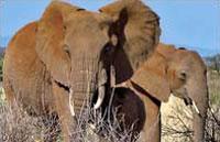 »Auf der Suche nach den Big Five - Reise Kenia Safari«