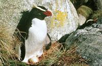 »Neuseeland für Genießer - Reise nach Neuseeland«