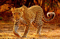 »Etosha Namibia Rundreise - Tierparadies Etosha«
