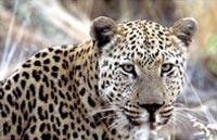 »Expedition Kapstadt - Namibia - Victoria Falls«