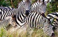 »Große Südafrika Expedition - Erlebnisreise Südafrika«