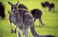 »Australien erkunden - Große Australien Rundreise«