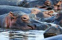 »Erlebnisreise Hippo - Botswana und Namibia Rundreise«