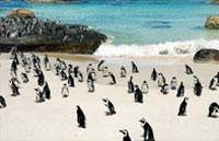 »Höhepunkte um Kapstadt - Günstige Südafrika Rundreise«
