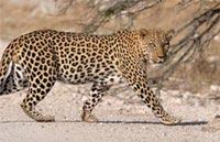»Höhepunkte Namibias - 20 Tage Lodgesafari Namibia«