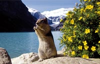 »Große Kanadareise - Rundreise Kanada«