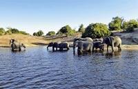 »Rundreise Namibia & Botswana auf eigene Faust«