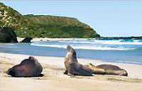 »Kangaroo Island Adventure - einzigartigen Erlebnis«