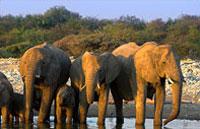 »Namibia Rundreise - Malerische Mammutdünen«