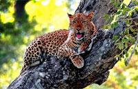 »Moremi - durch Botswana und den Caprivi in Namibia«