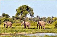 »Das wilde Herz Afrikas - Rundreise Namibia Botswana«