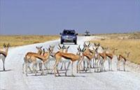 »Dünen, Himbas & Etosha - Mietwagenreise Namibia«