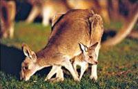 »Traumküsten, Outback und Riff - Mietwagenreise Australien«