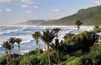 »Reise nach Neuseeland - Riesenfarn und Südseestrand«
