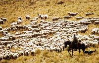 »Neuseelandsafari - erlebnisreiche Rundreise Neuseeland«