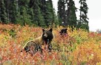 »Gruppenreise Kanada - Zwischen Pazifik und Rocky Mountains«