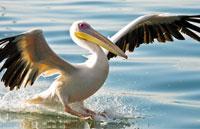 »Atlantik, Dünen und wilde Tiere: 11-Tage-Erlebnisreise«