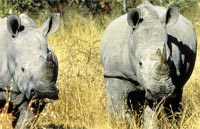»SüdafrikaRundreise - Erlebnis Südafrika«