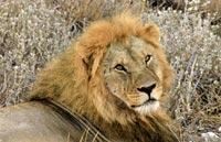 »Südafrika Erlebnis pur: South Africa Explorer Rundreise«