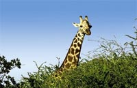»Namibia Entdeckungsreise«