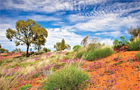 »Mietwagenrundreise Australien von seiner schönsten Seite«