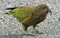 »Naturparadies Stewart Island«