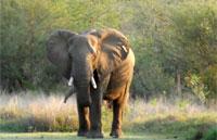 »Rundreise Südafrika Classics zum Kennenlernen«