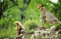 »Südafrika Safari - Fly In Safari Bausteinreise Südafrika«