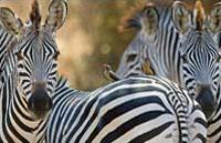»Südafrika Highlights - Preiswerte Rundreise Südafrika«