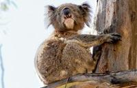 »Naturwunder Australiens - Rundreise Australien«