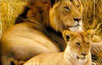 »Tansania Serengeti - Rundreise Tansania«